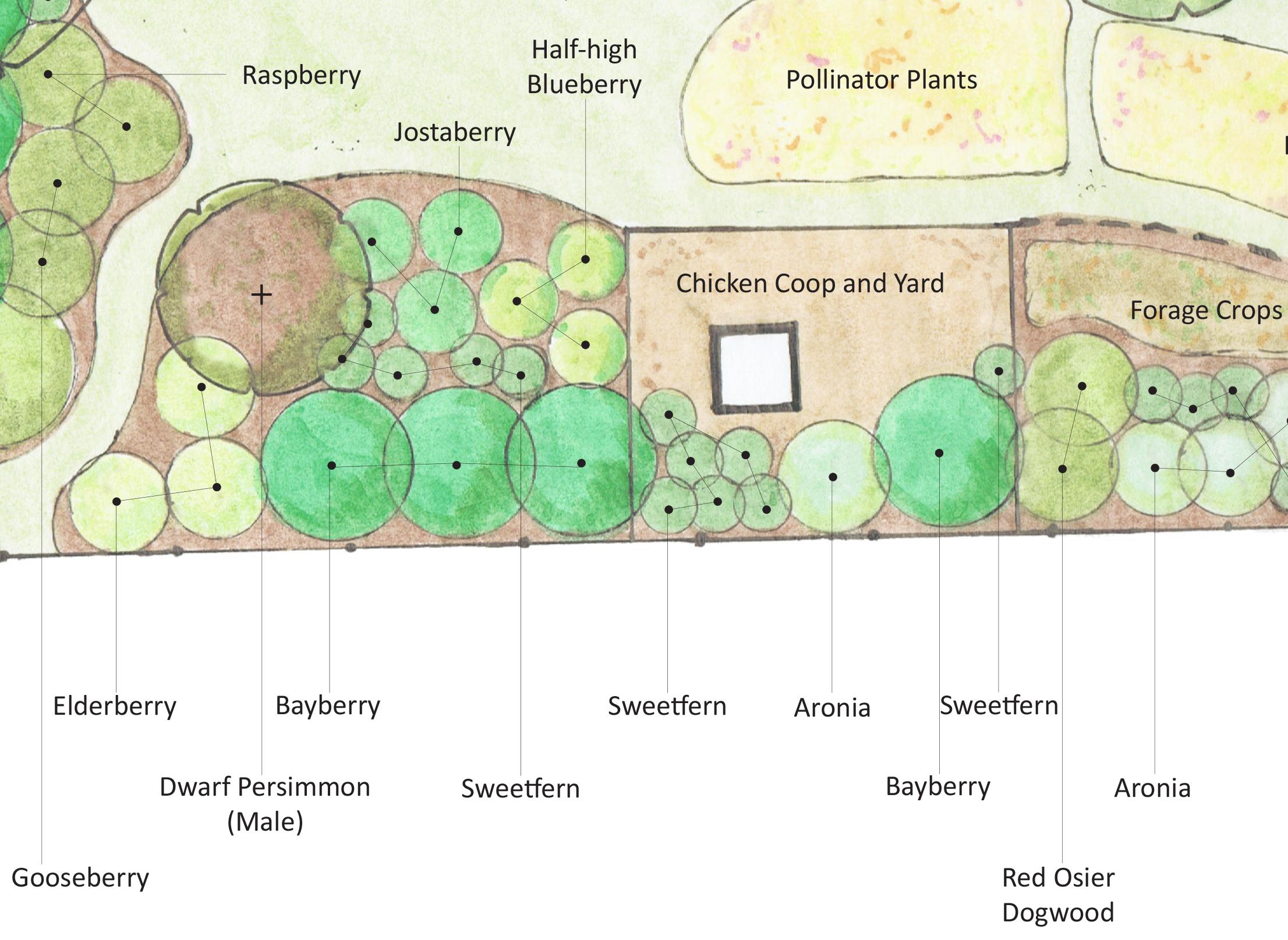 Landscape Design Finalized For The Montague Urban Homestead