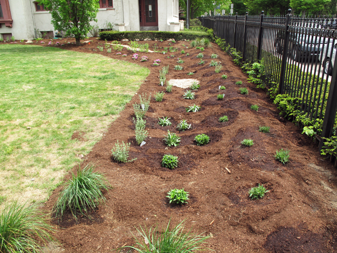Planted rain garden at Springfield Museums