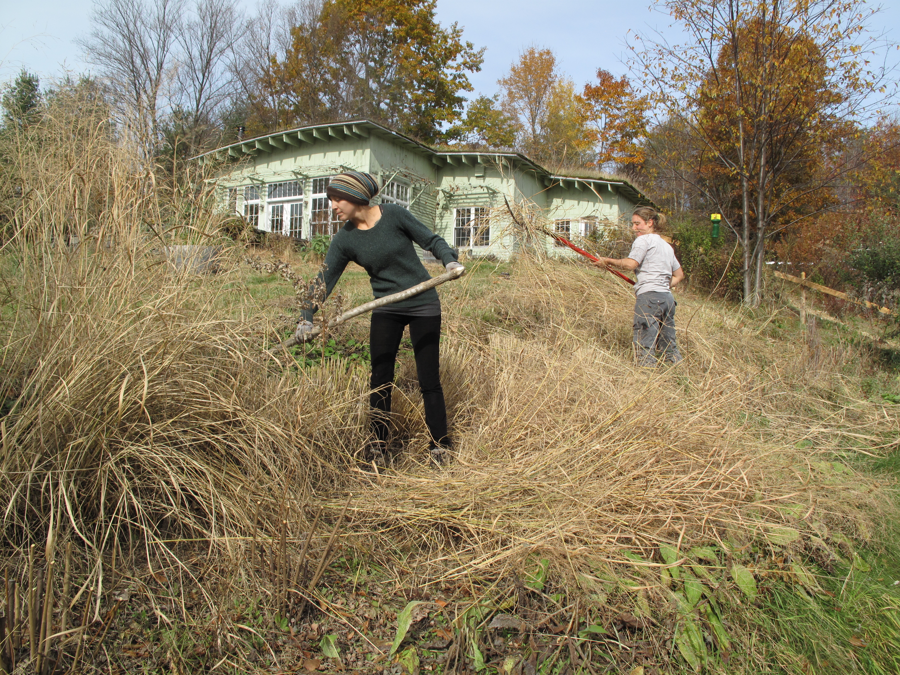 Rice Paddies And Persimmons: Putting Wildside Gardens To Bed For The Season