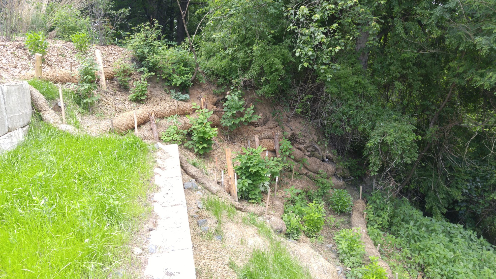 slope stabilization and wetland protection regenerative design