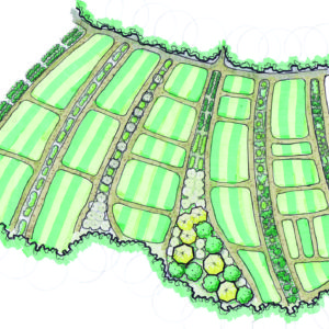 BSF_PHOTO 3_Alley-Crop_Plan_140203