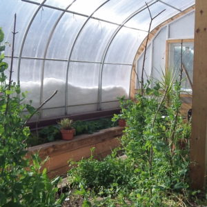 The Passive Solar Climate Inside The Bioshelter Allows For The Production Of Citrus And Figs.
