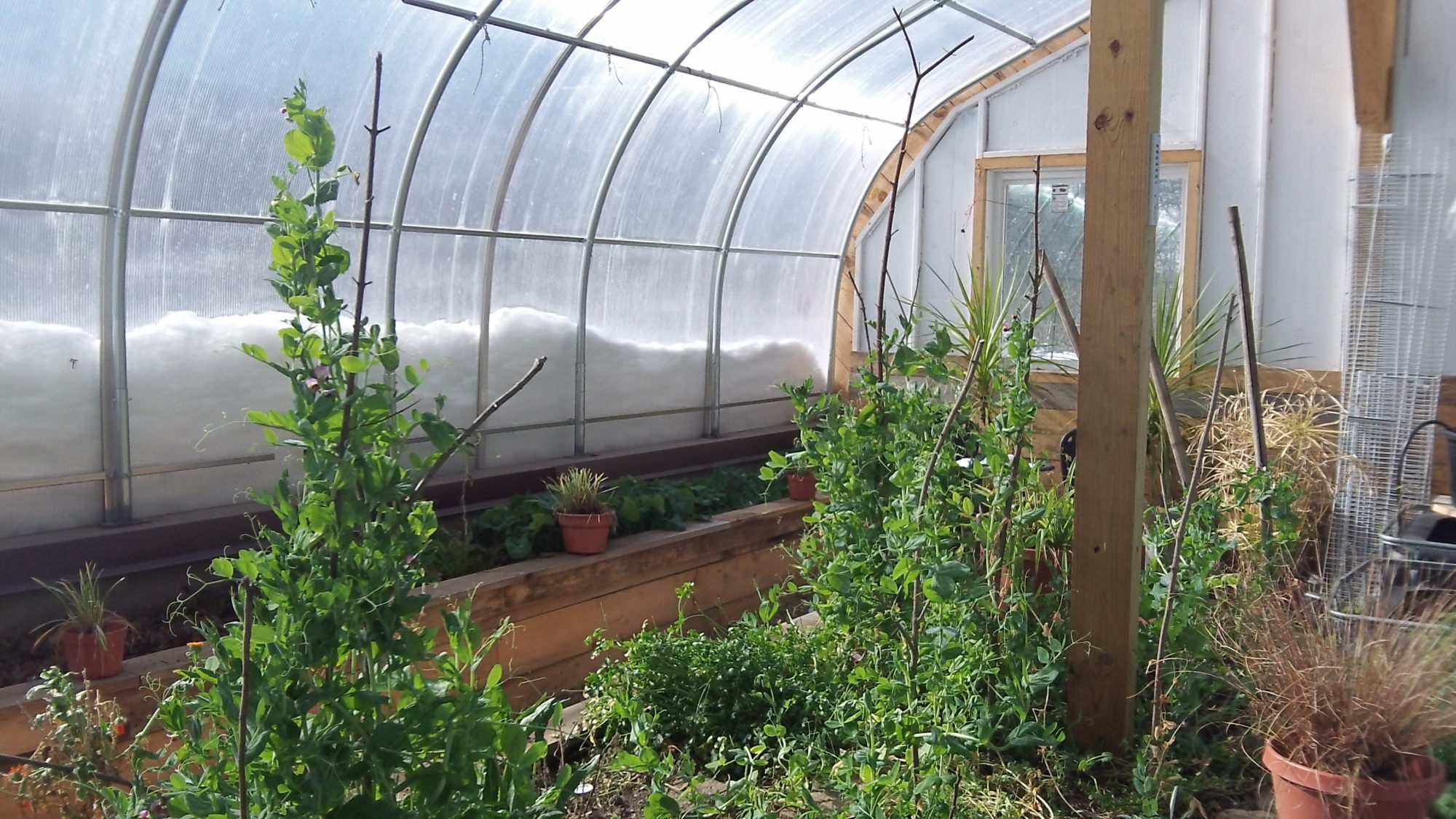 backyard bioshelter four season passive solar greenhouse