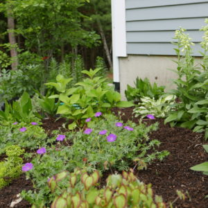 Gardens Designed To Hide The House's Foundation Contain Many Native Plants.