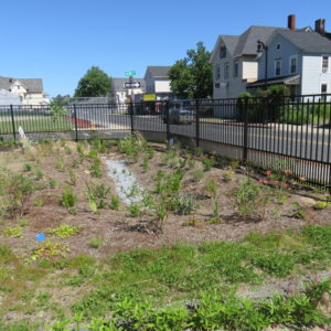 Another View Of The Rain Garden.