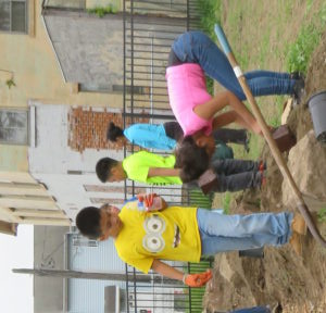 Community Members Help To Plant A Beautiful Flowering Streetscape To Border The Urban Farm.
