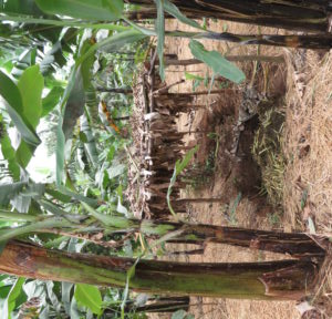 A Shaded Compost Area At An Agricultural Cooperative In Rwanda.