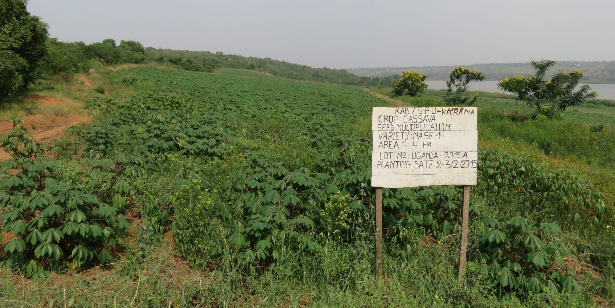 Agricultural Campus Design In Rwanda