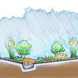 Cross Section Of A Rain Garden.