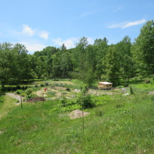 A View Of The Vegetable Gardens.