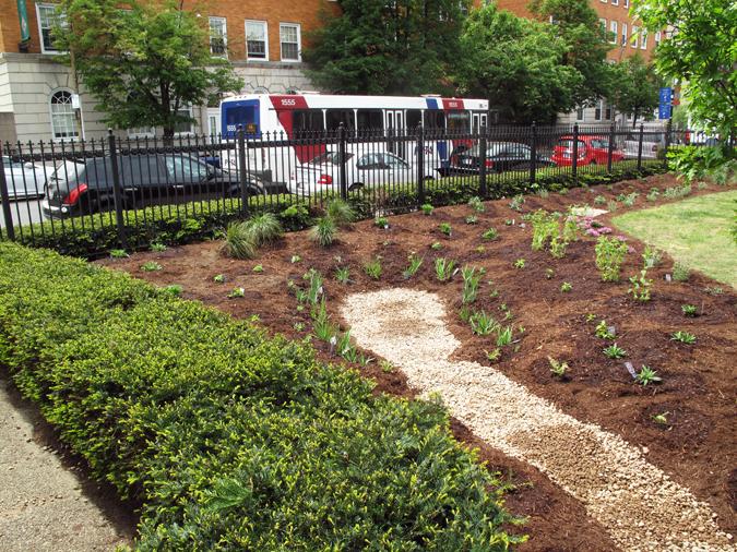 Springfield Museum's completed rain garden