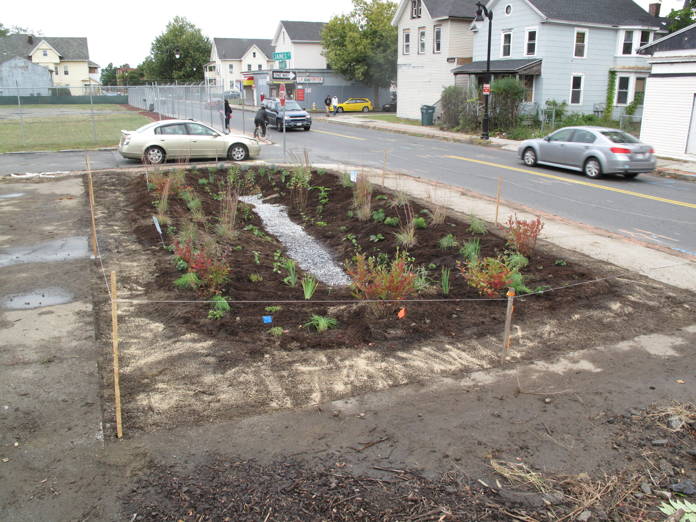 The Walnut Street lot after planting a rain garden
