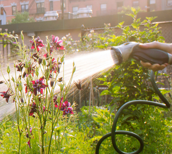 Urban Gardening: Managing Contaminated Soil
