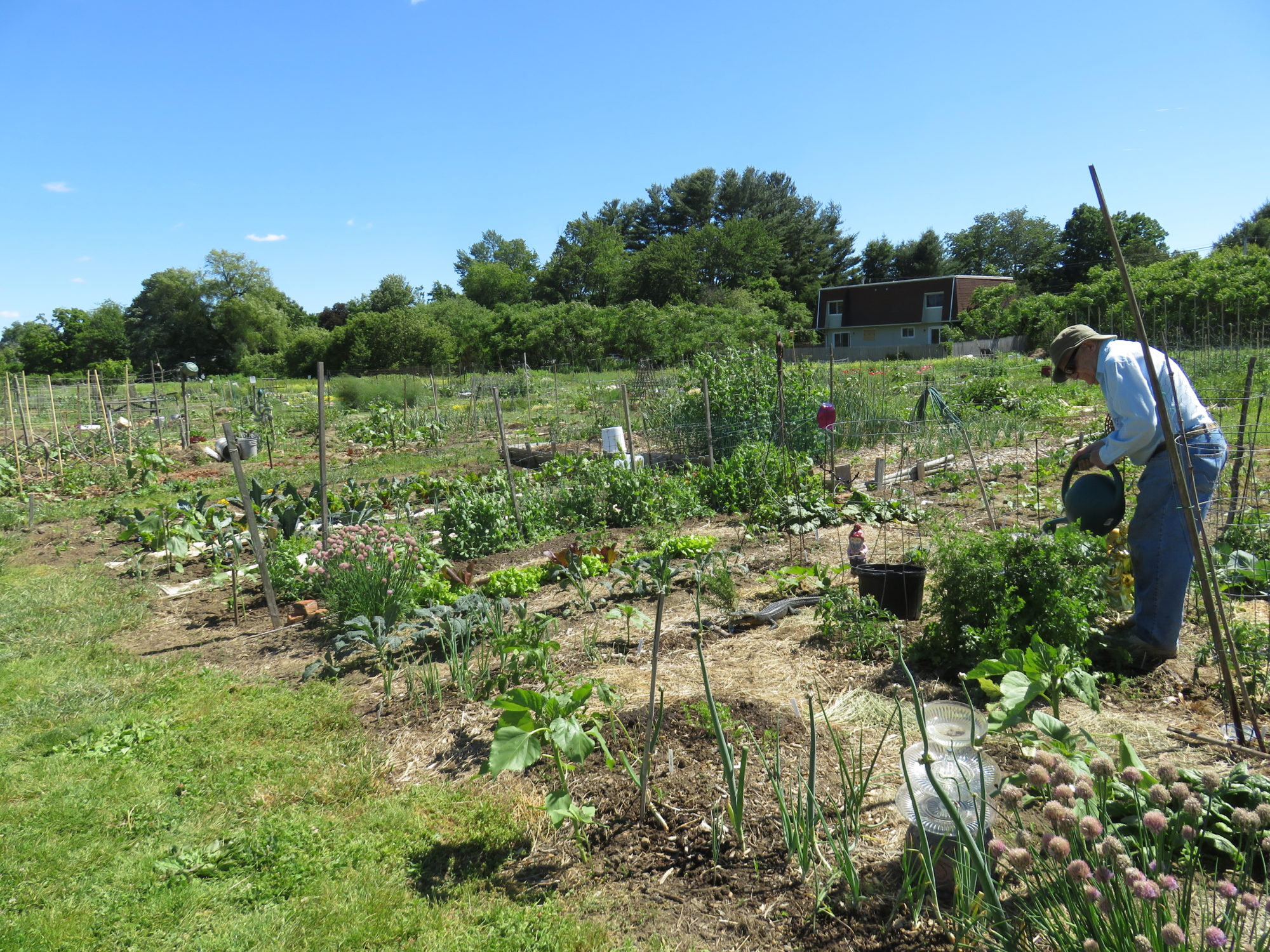 Grow Food Northampton Community Garden Regenerative Design Group