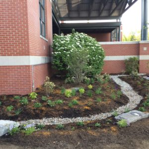 A Rain Garden Installed With The Help Of Students At The Renaissance School.