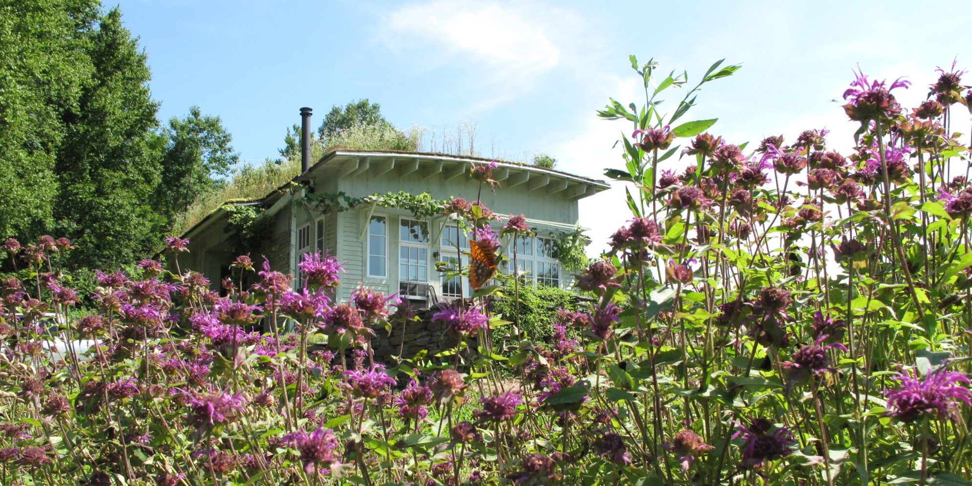 Wildside Cottage And Gardens