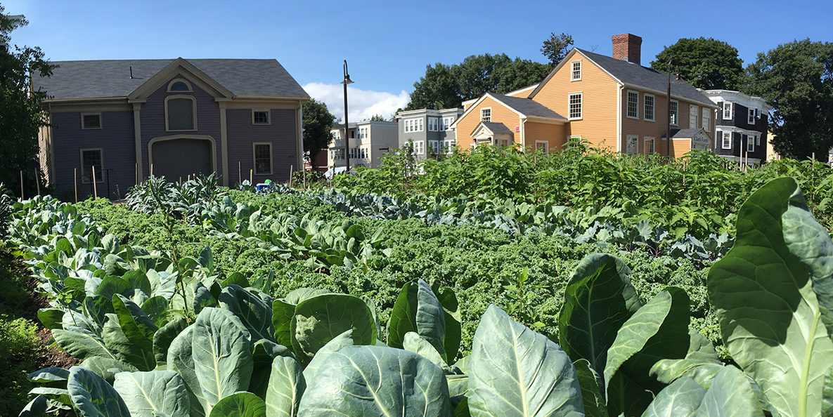 Lush Urban Farmscape With Annual And Perennial Crops And Historic Buildings.