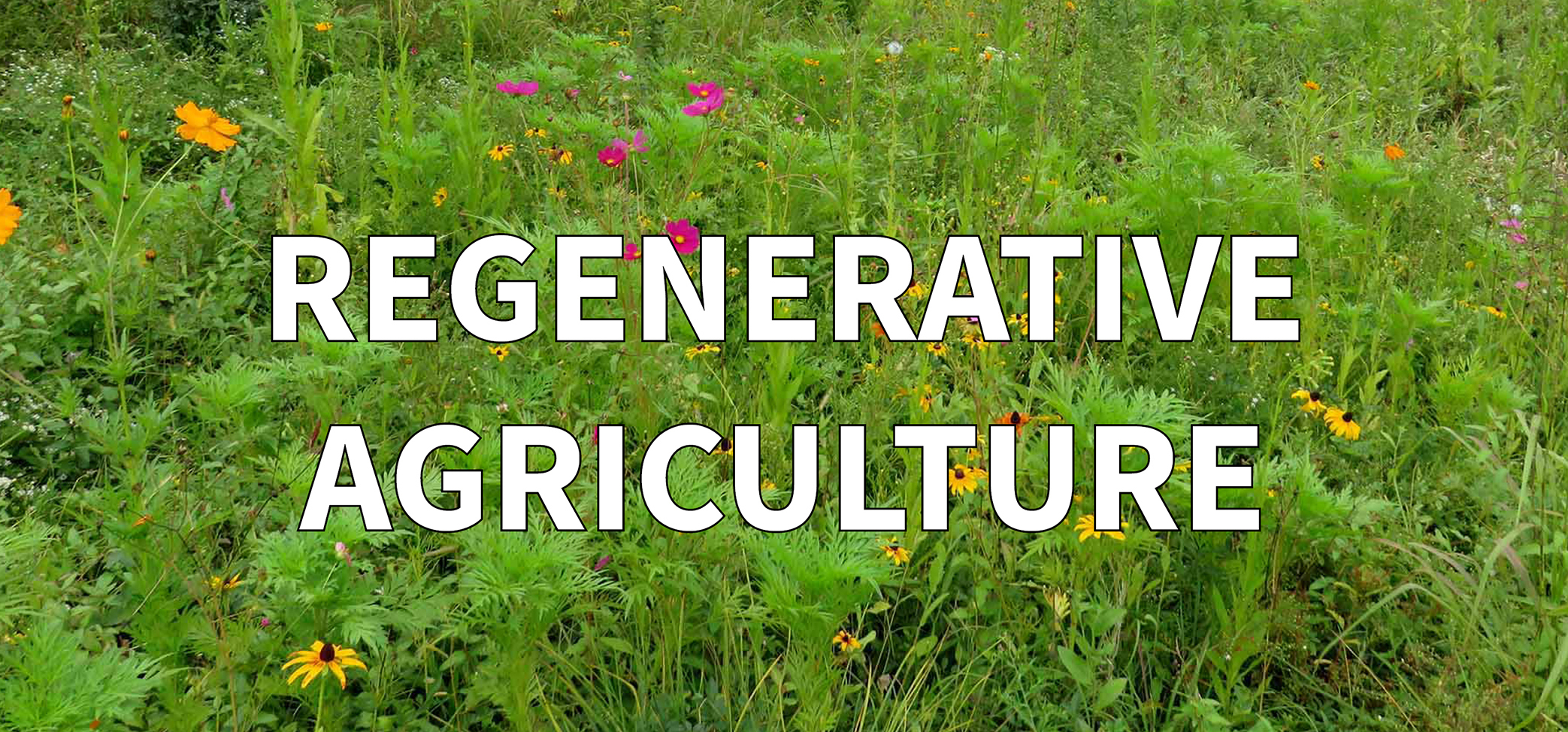Restoring Land With Regenerative Agriculture